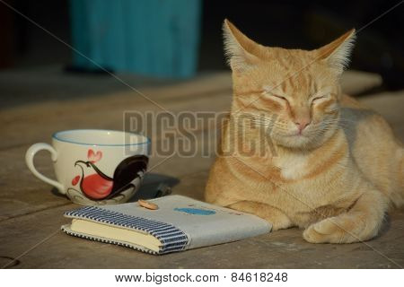 Yellow cat with coffee and diary
