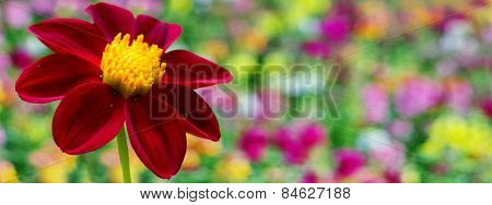 Red Dahlia Flower Border Design