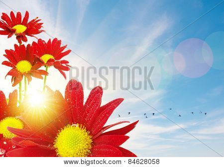 Red flowers and flock of birds under a bright warm sunny sky
