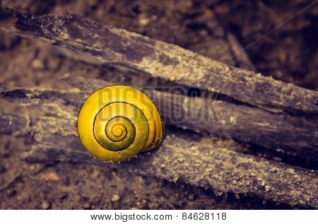 Closeup on a little yellow snail shell on brown dirt