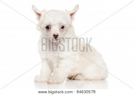 Chinese Crested Puppy On White Background