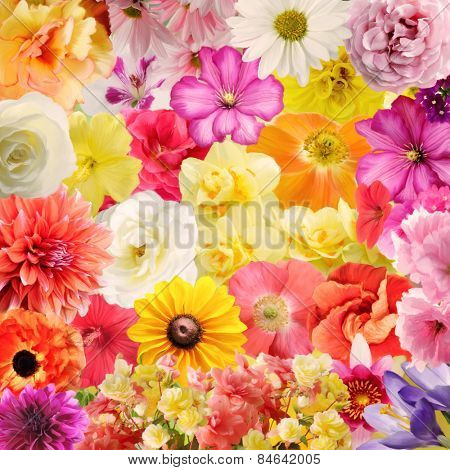 Digital Painting Of Colorful Floral Background