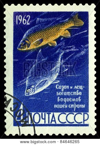 Vintage  Postage Stamp. Fishes Carp And Bream.