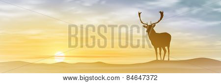 Male Stag Deer with Misty Sunset, Sunrise. Vector EPS 10.