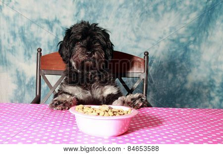 A cute dog sits at the kitchen table and waits to be served dinner.