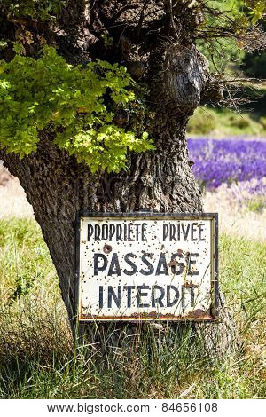 tree and lavender at background, Provence, France
