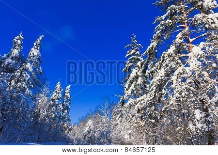 Eternal Frozen Winter