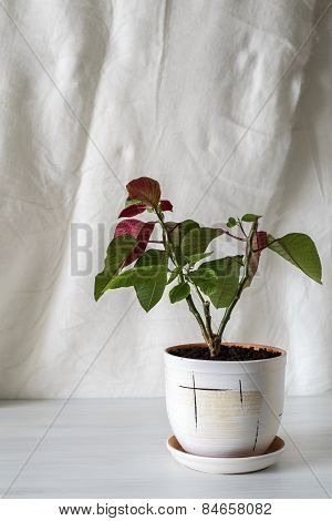 Houseplant On An Empty Background