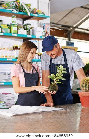 Young woman making apprenticeship in nursery shop with gardener and holding a kokedama
