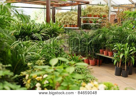 Many green plants for sale in a nursery shop