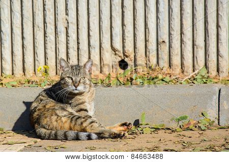 Stray Cat Sitting On The Ground