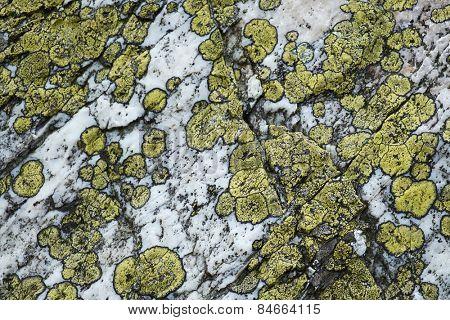 Lichens on stone texture, macro
