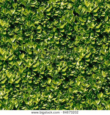 Seamless laurel foliage background.