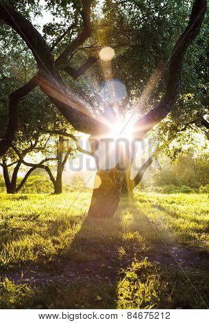 Sun Shines Through Tree Crowns In Summer