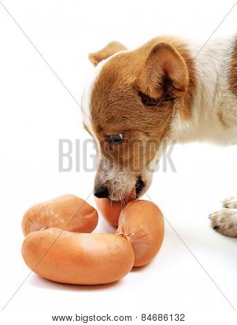 Cute dog with sausages isolated on white background