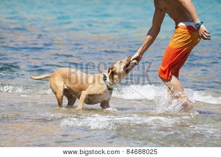 Man playing with hid dog at the beach