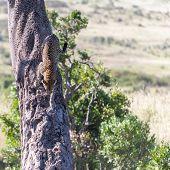 pic of veld  - Africa - JPG