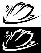 stock photo of black swan  - mute swan  - JPG