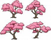 image of sakura  - Sakura trees - JPG
