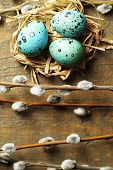 image of pussy  - Bird eggs in nest and pussy willow flowers branches on wooden background - JPG