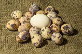stock photo of quail egg  - a chiken egg and eggs of quail - JPG