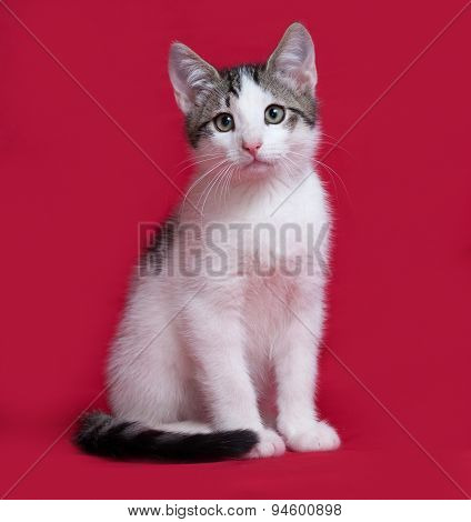 Striped And White Kitten Sitting On Red