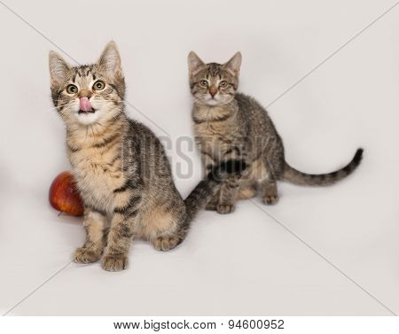 Two Striped Kitten And An Apple On Gray