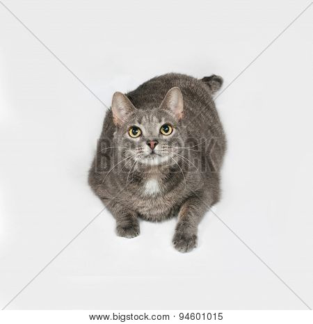 Gray Striped And White Cat Lies On Gray
