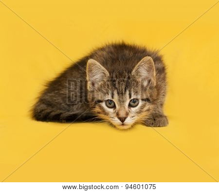 Tabby Kitten Lies On Yellow