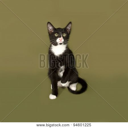 Black And White Kitten Sitting On Green