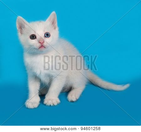 White Fluffy Kitten Sitting On Blue