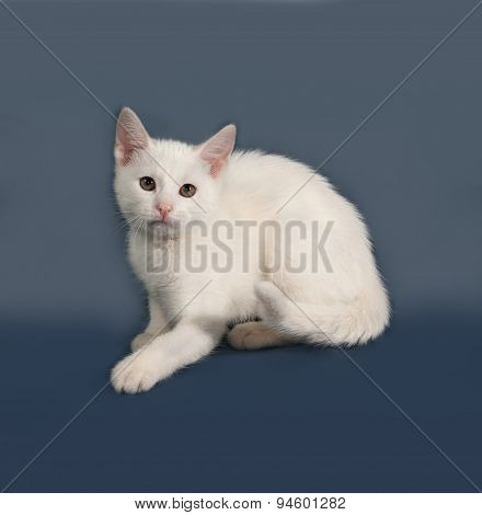 Small White Kitten Sitting On Gray