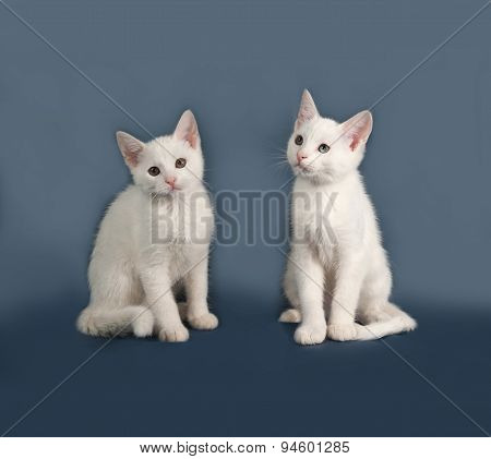 Two Small White Kitten Sitting On Gray