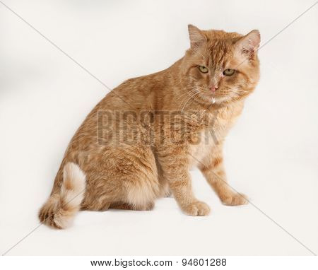 Red Cat Sitting On Gray