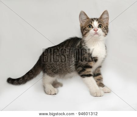 Striped And White Kitten Going On Gray