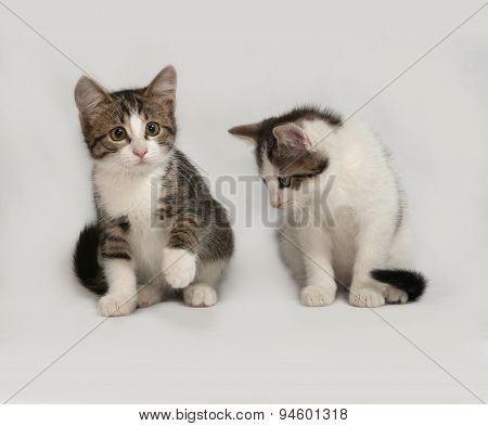 Two Striped And White Kitten Sitting On Gray