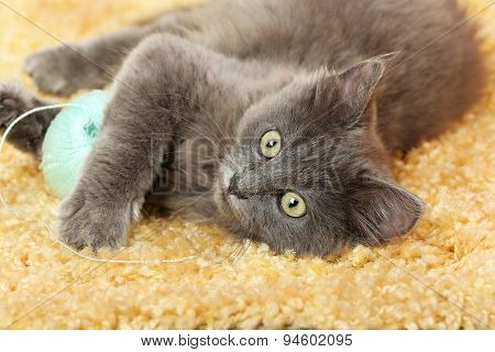 Cute gray kitten plays with threads for knitting on carpet at home