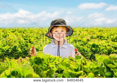 Young toddler boy picking strawberries on strawberry field