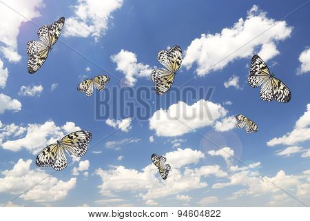 Beautiful butterflies on sky background