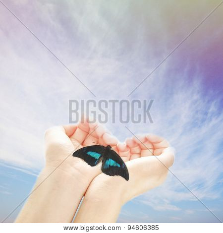 Human hands with butterfly on sky background
