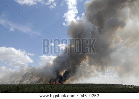 Forest Fire with Copy Space