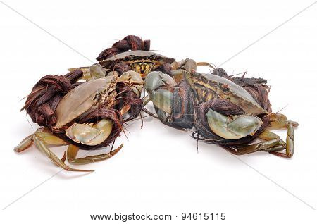Crab from the Mekong delta