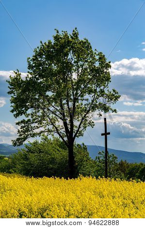 Cross On The Colza Field