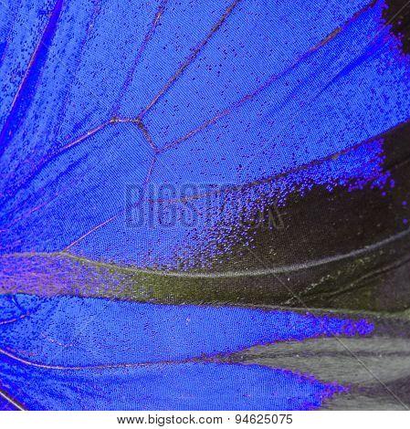 Blue Butterfly Wing