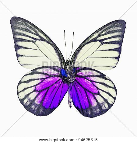 Fancy Butterfly Isolated On White