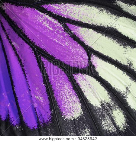 Purple Butterfly Wing