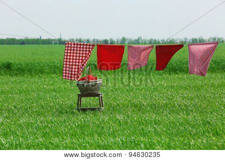 Laundry line with clothes in field