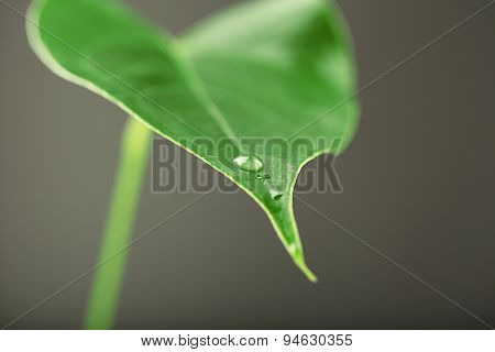 Green leaf with droplets on gray background