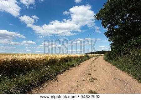 Rural Road. Summer Landscape