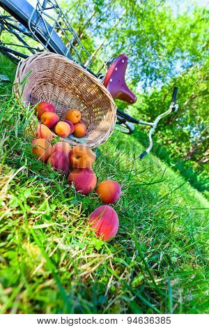 Scattered Apricots
